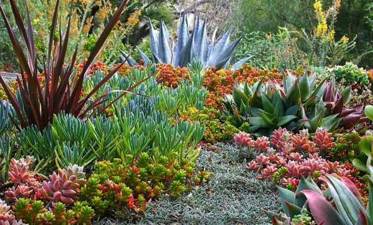 Plantes Succulentes & Tropicales