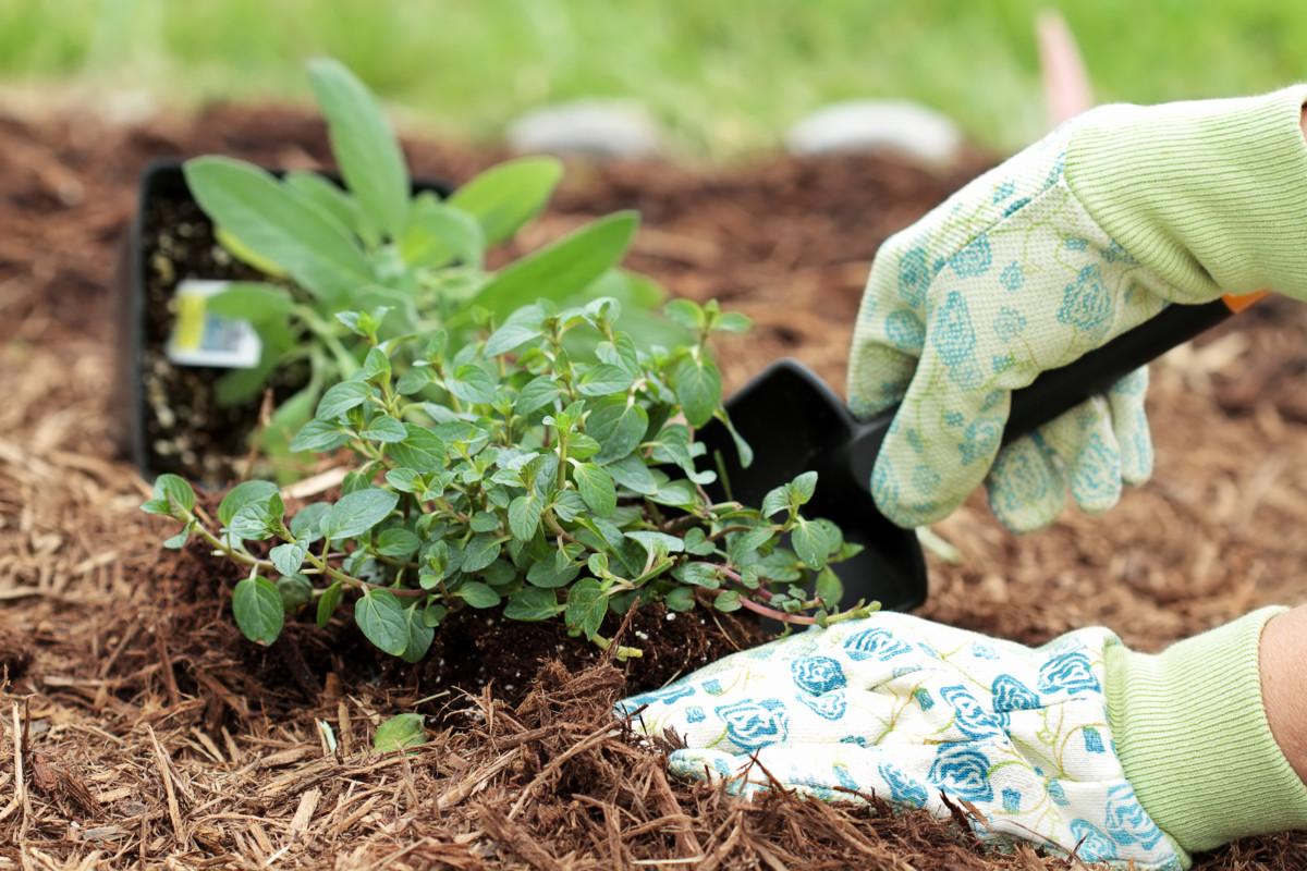 Terre, Paillis & Compost
