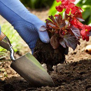 Articles Jardinage