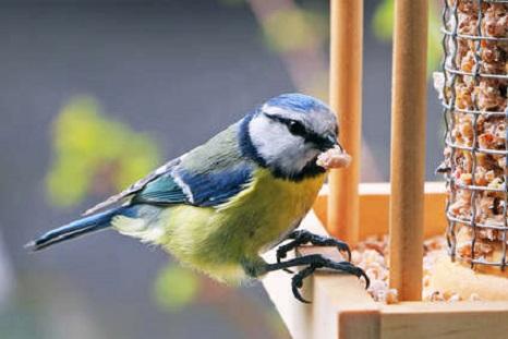 Nourriture à oiseaux