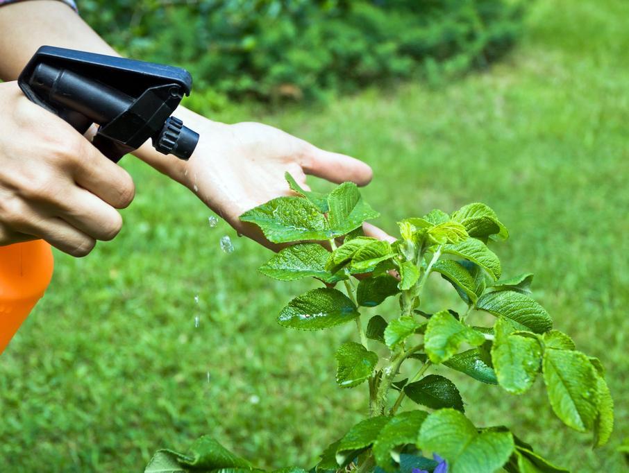Pesticides, insecticides, fongicides & acaricides